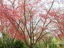 NJ Springtime